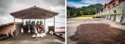 Coffee processing and plantation