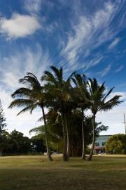 Palms & Sky