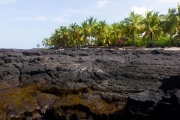 Lava shore and palms