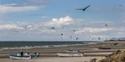 Bird & Kites