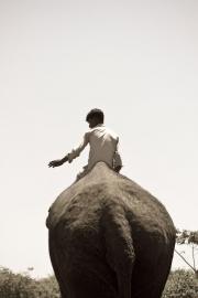Elephant ride, India