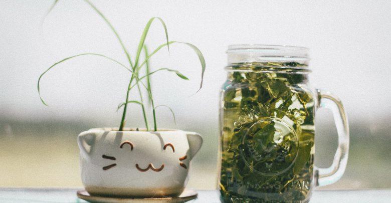 Herbal, Rady starých mám, prírodná medicína