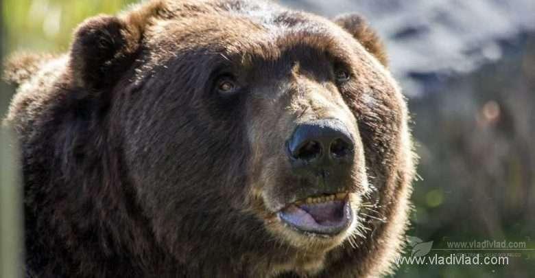 Photo of Rande s Medveďom, alebo Prečo (ne)chcete stretnúť medveďa?