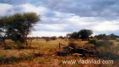 Photo of Botswana: Kalahari