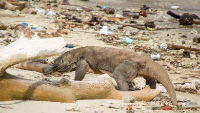 Photo of Bali – oficiálne prvý indonézsky ostrov bez plastov!