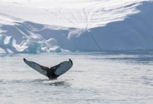 Photo of Greenland: Ilulissat, Disko and around