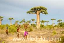Photo of Madagascar in brief