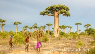 Photo of Madagascar in brief